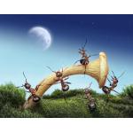 Học bài học tổ chức lãnh đạo từ loài kiến